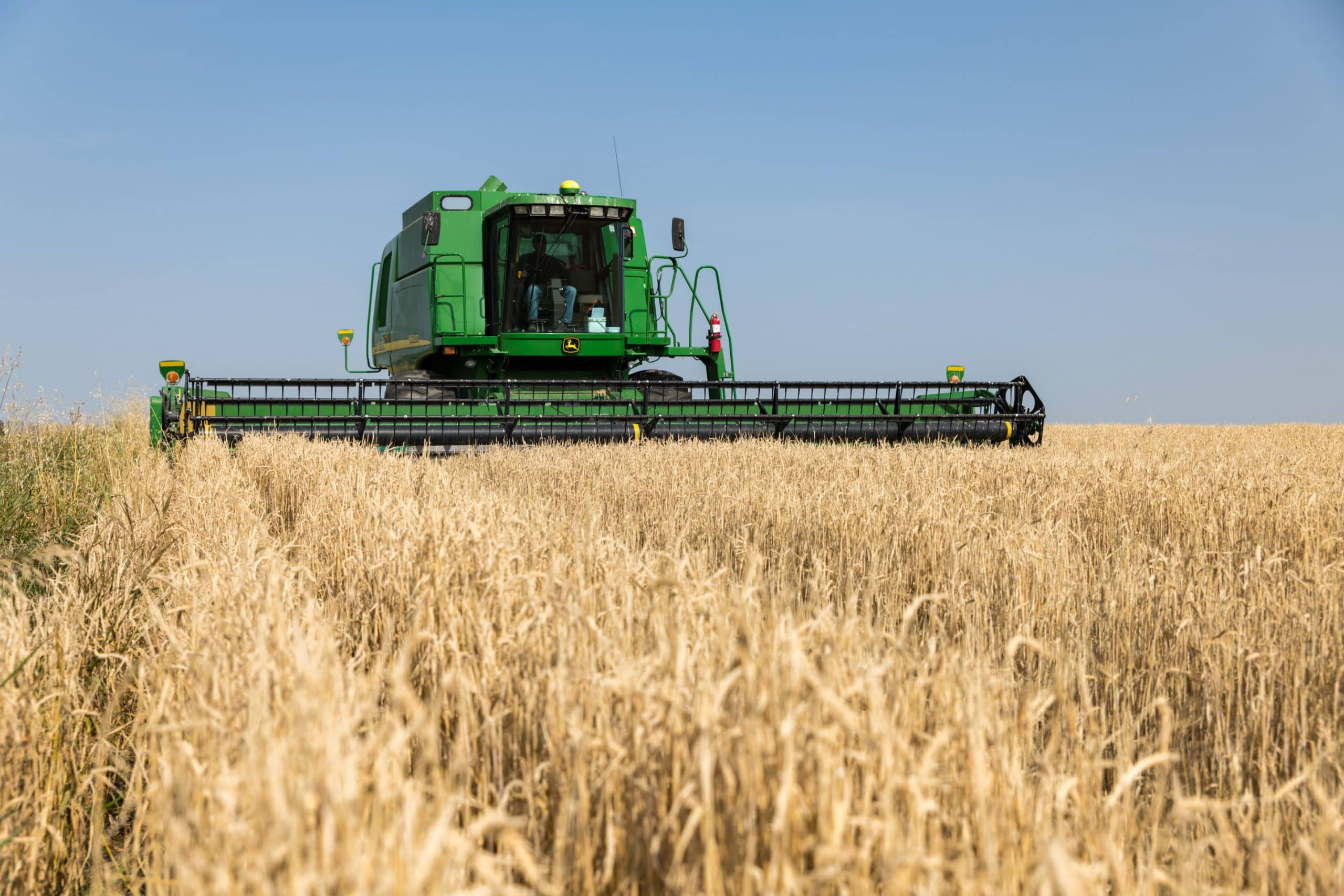 John Deere combine harvesting wheat in Olds, Alberta.
